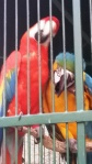 macaws-002